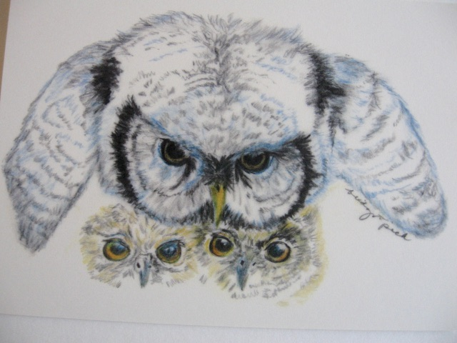 Owl and Babies 2