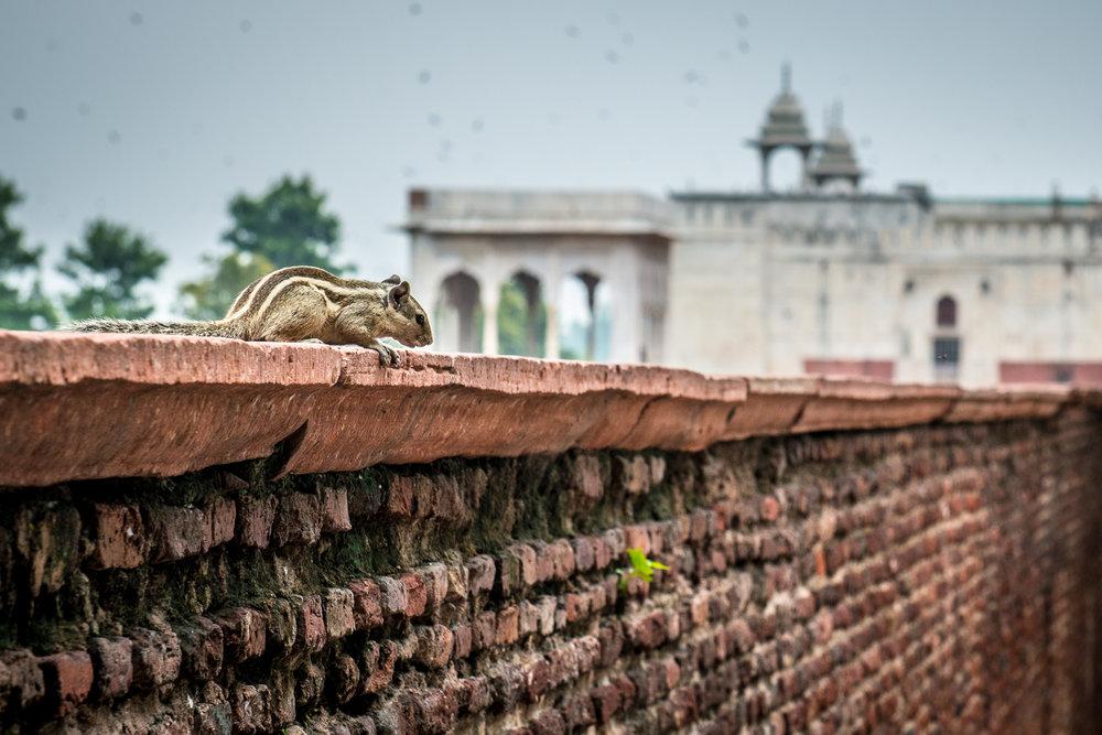 Nueva Delhi 13 Viajar Inspira