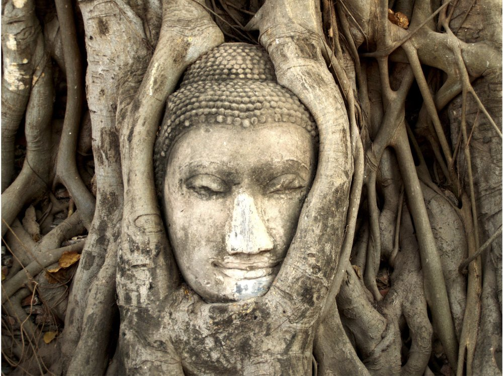 Buddha in tree web.jpg