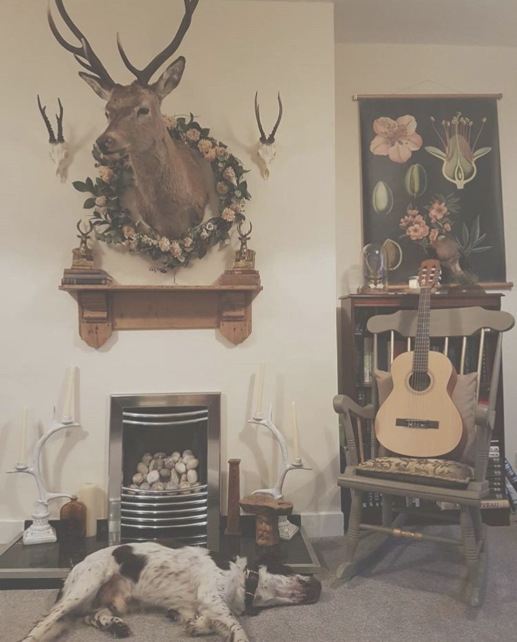 Talented Ethical Taxidermist Kate's (dead things by Kate) gorgeous home