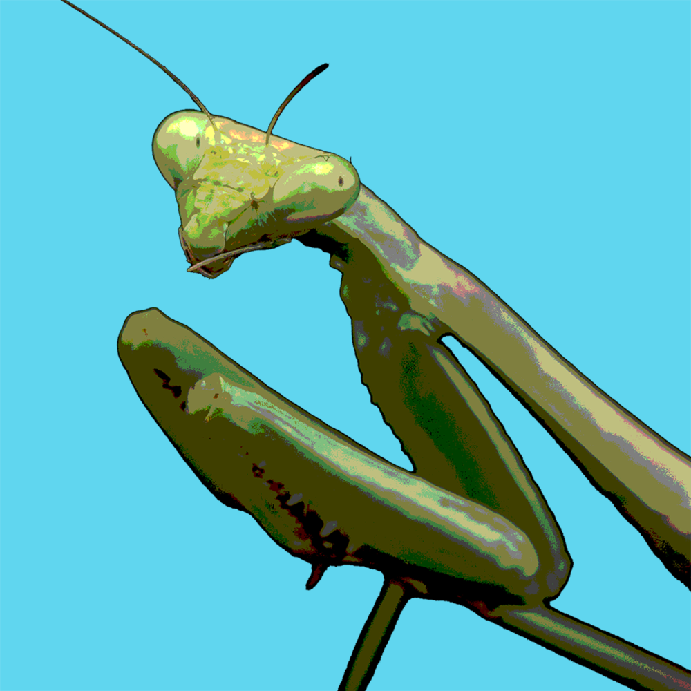 praying-mantis_2.png