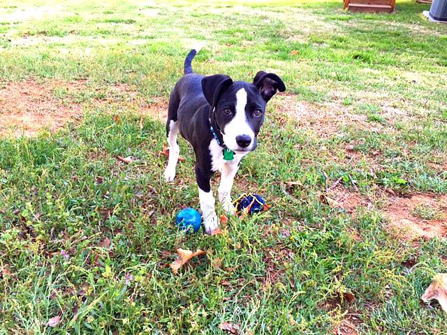 chase pup web.JPG