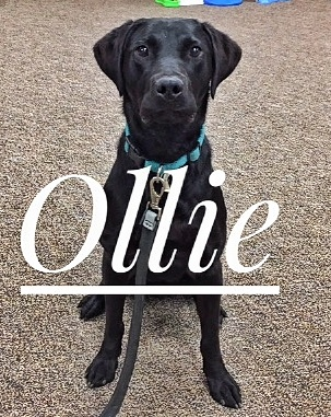 ollie with name.jpg