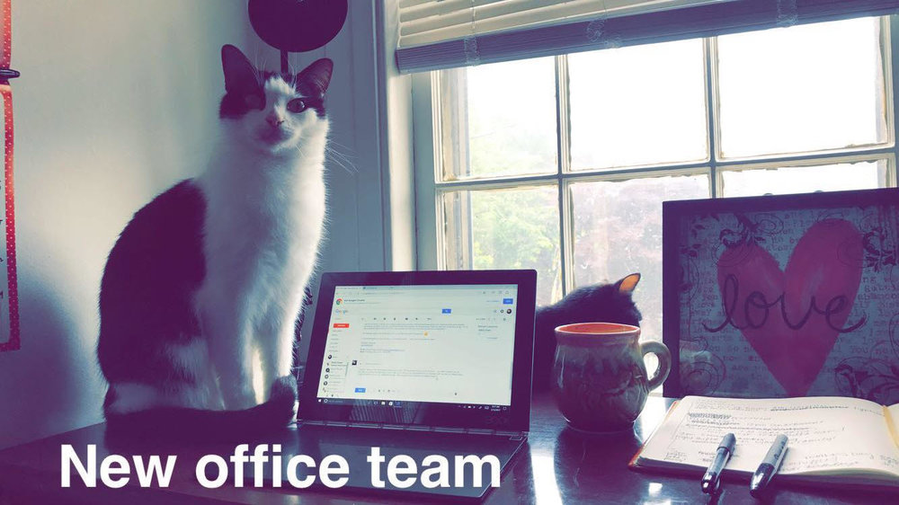This is what a home office looks like when your cats are nosy.