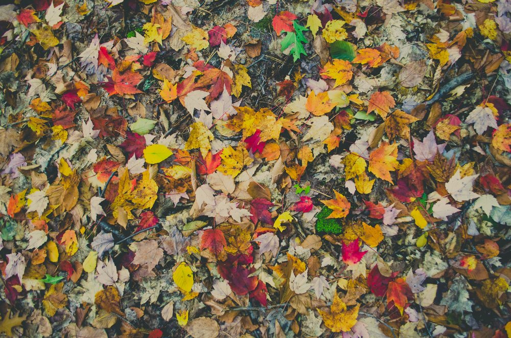 kelly-sikkema-108975-unsplash.jpg