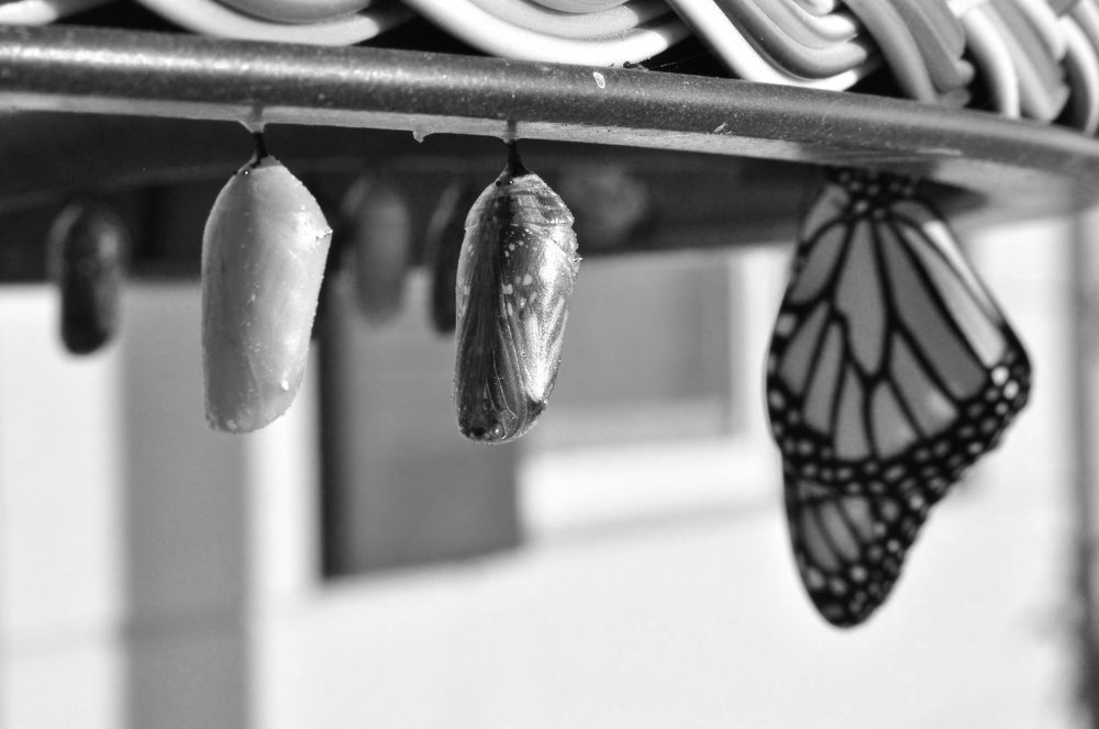 suzanne-d-williams-794133-unsplash.jpg