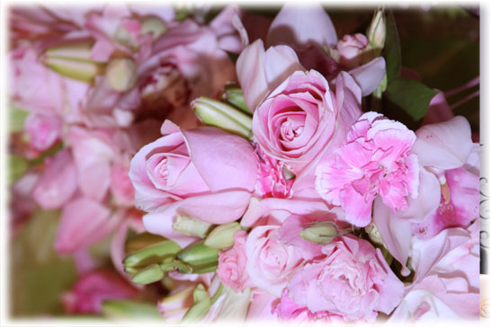 fl_pink_01.jpg