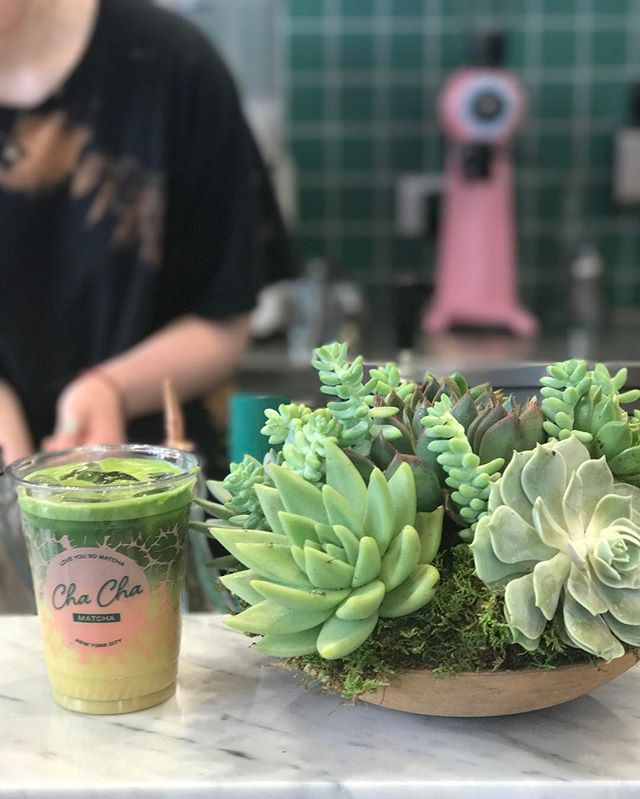 Two of my favorite things. @fatplantnyc @chachamatcha 🌱💚 #fatplant #fatplantnyc #sustainable #succulents #fuckflowers #chachamatcha