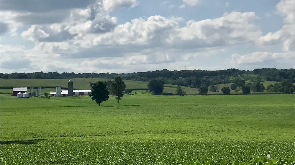 A traditional family farm with acres of soybean fields.