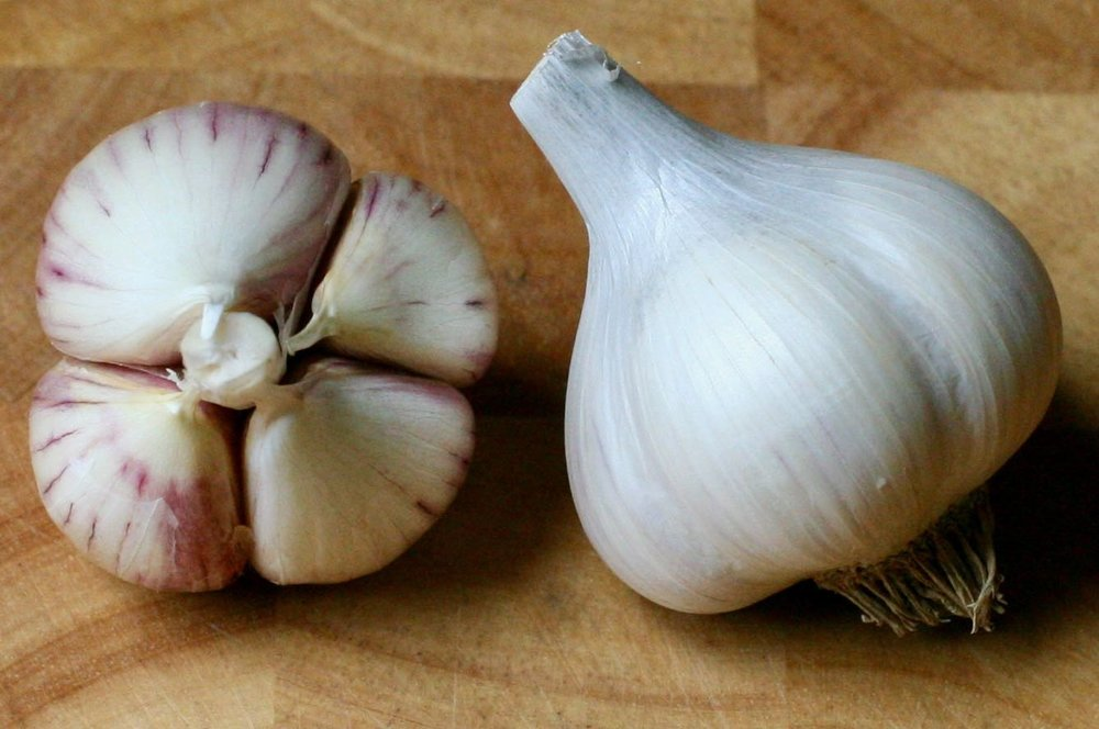 Music - ~Hard-neck~4-6 extra-large cloves per bulb~Stores 6-8 months~Well balanced flavor with slow-building heat when raw; very sweet and buttery baked