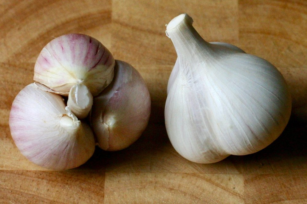 Polish Hardneck - ~Hard-neck~4-6 extra-large cloves per bulb~Stores 6-8 months~Instant fiery heat and strong garlic flavor raw; sweet but still flavorful baked or roasted