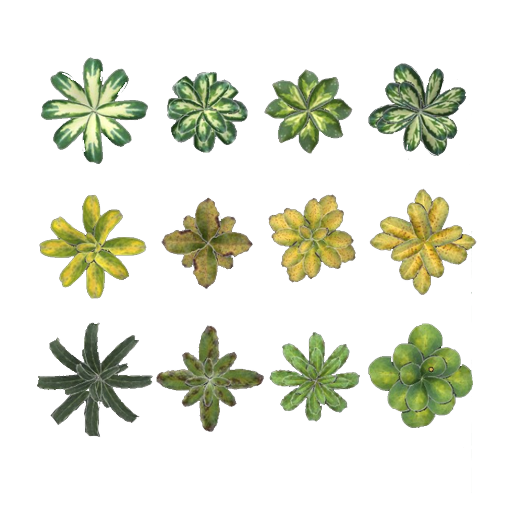 Untitled-1plants01.png