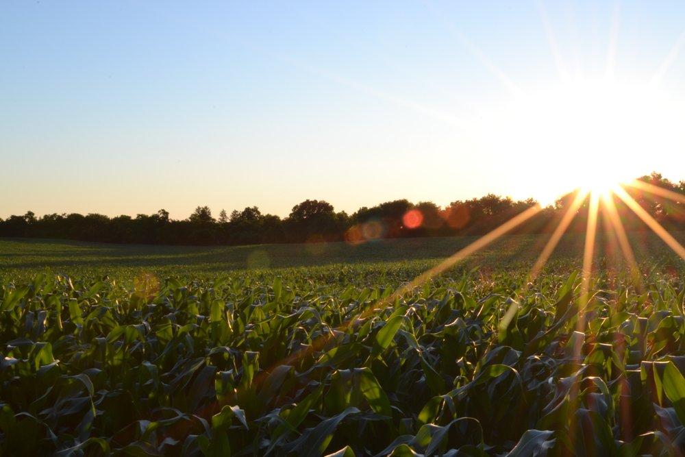 Farm Insurance -