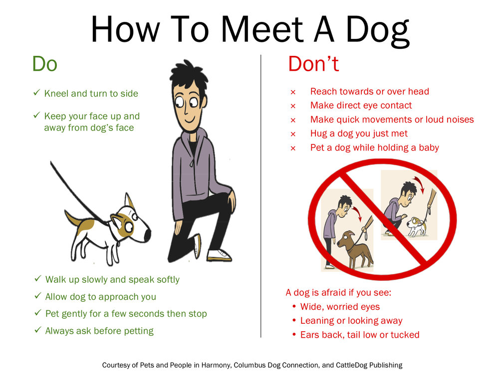 How to Meet a Dog.jpg
