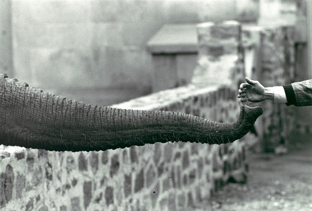 winogrand-elephant-2.jpg