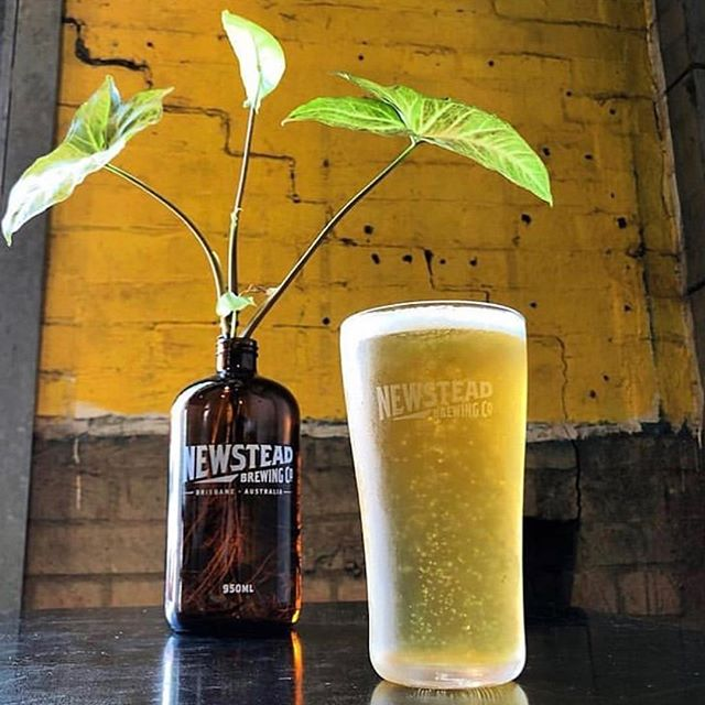 Brewings 🍺🌱Fresh and crisp from @newsteadbrewingco @nbco_newstead • Taste and relax with their signature flavours on The City Run Tour!
