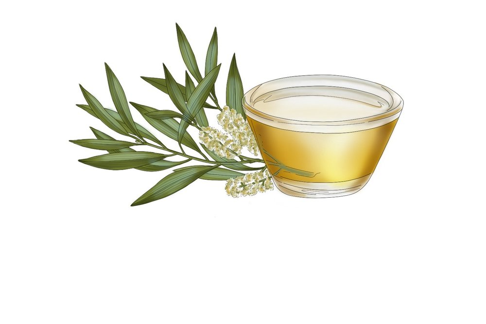 Tea Tree Oil - A natural preservative that helps to keep a product fresh and stable with antiseptic, germicidal, antimicrobial, and anti-inflammatory properties. It is used topically to treat cuts, wounds, skin infections, stop itching, and reduce redness. Tea tree oil can be a little overpowering and strong when used on its own, that's why it's in the Clay Mask to work its magic with a blend of other calming and healing ingredients.