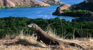 KOMODO NATIONAL PARK - COMPLETED: ONGOING