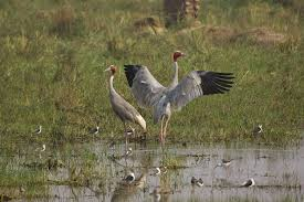 KEOLADEO NATIONAL PARK - COMPLETED: HAVEN'T STARTED