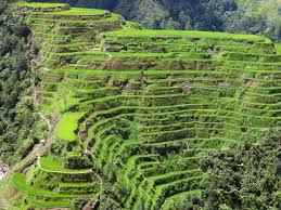 THE IFUGAO RICE TERRACES - COMPLETED: HAVEN'T STARTED