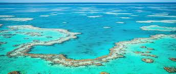 THE GREAT BARRIER REEF & THE CORAL SEA - COMPLETED: HAVEN'T STARTED