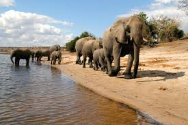chobe national park - COMPLETED: HAVEN'T STARTED