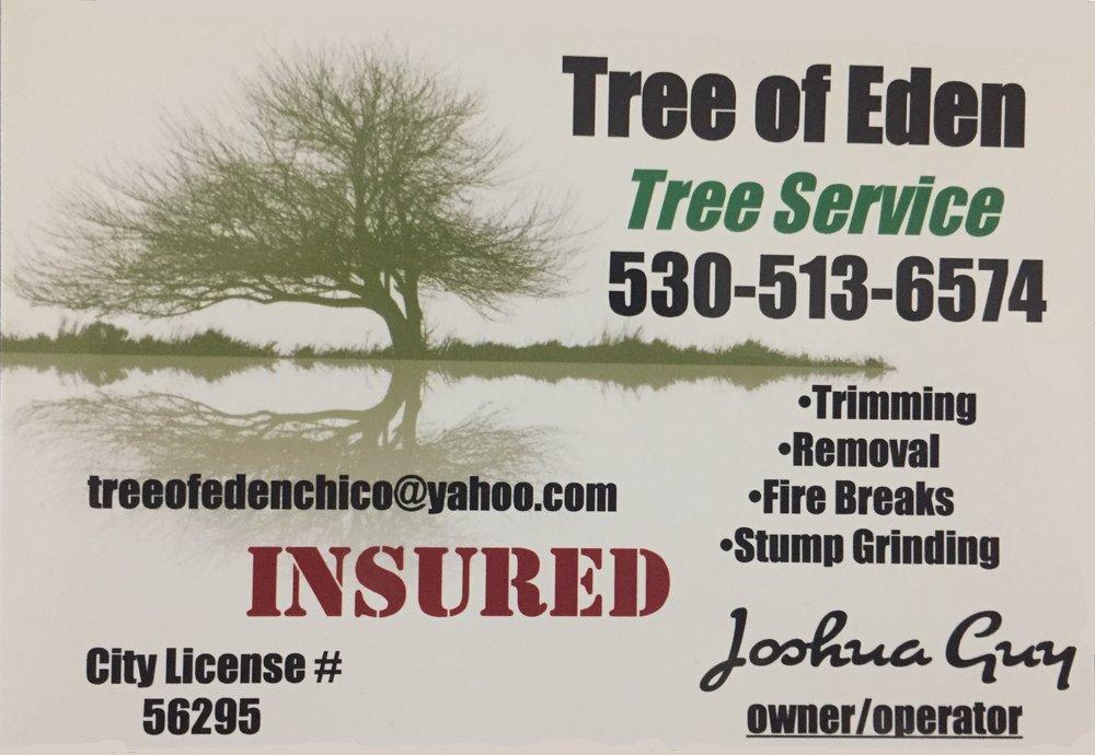 Tree of Eden.jpg