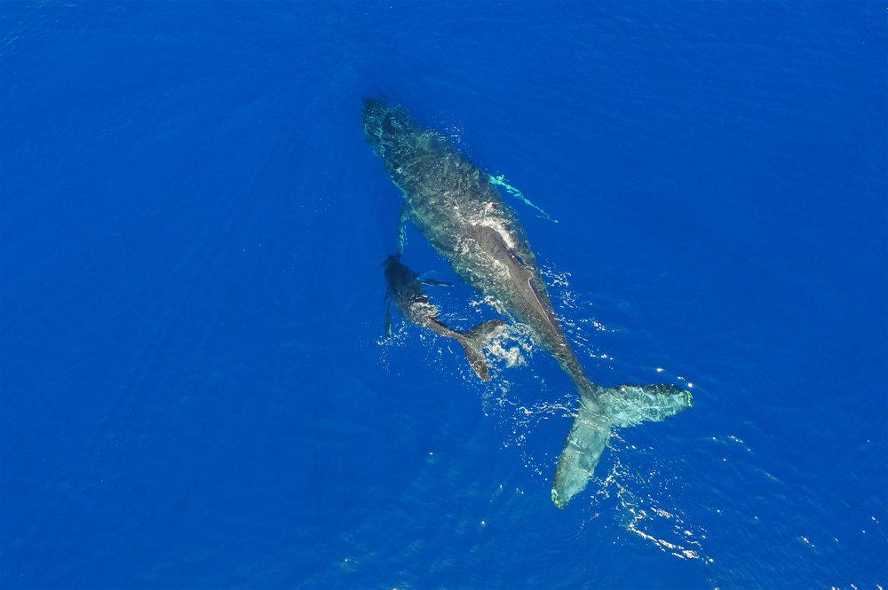 Whale overhead WR copy.jpg