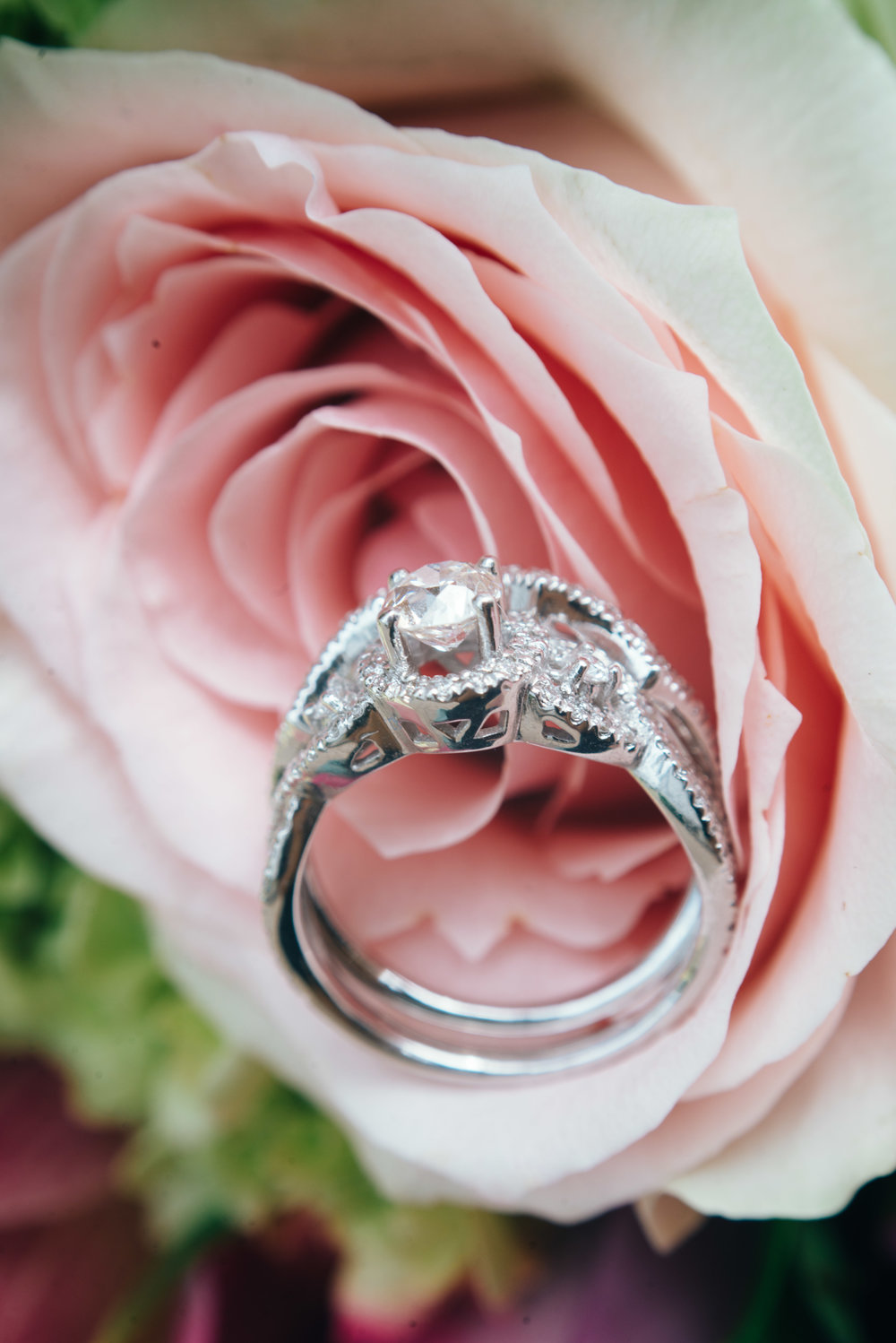 Close up shot macro photo of engagement and wedding rings nestled in a pink rose.