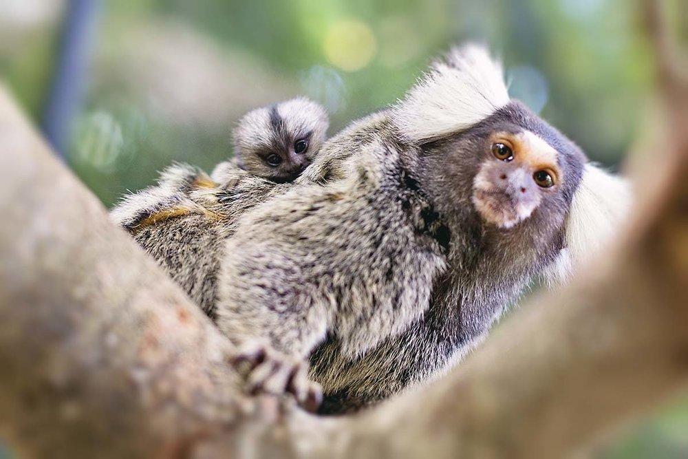 sth-american-monkey1.jpg