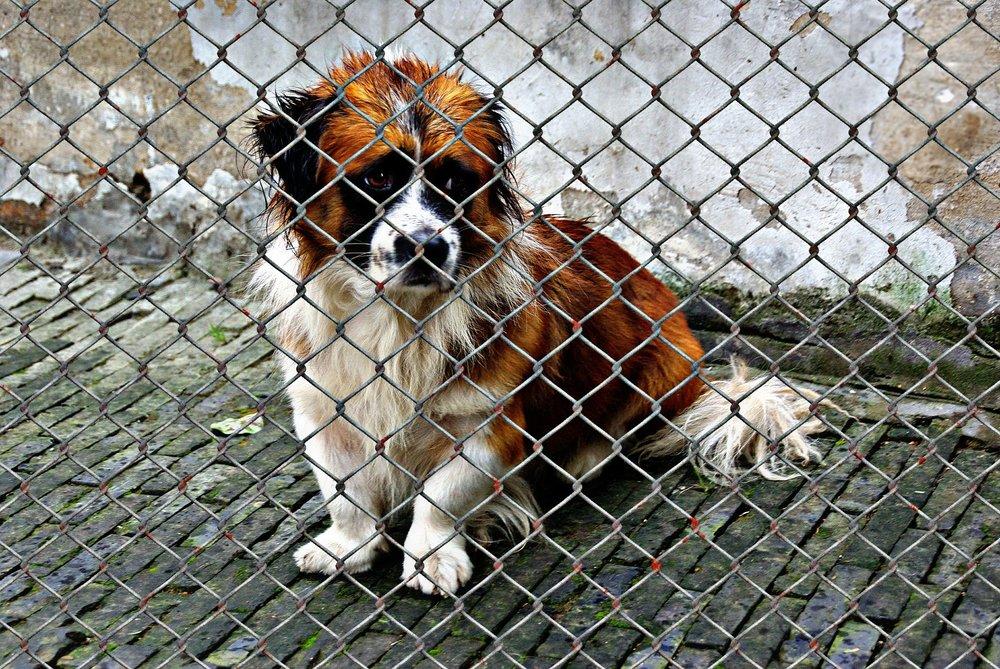 animal-welfare-1116206_1920.jpg