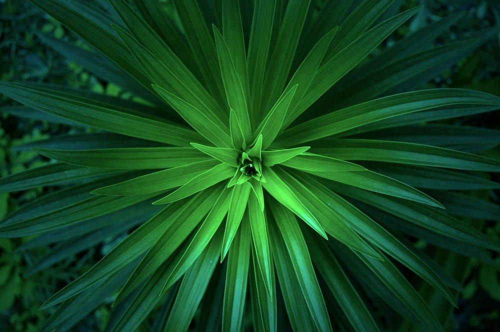 green-1245733.jpg