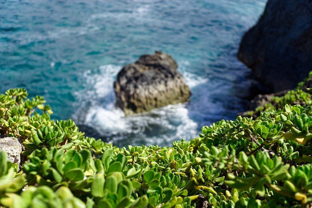 coastal-succulents