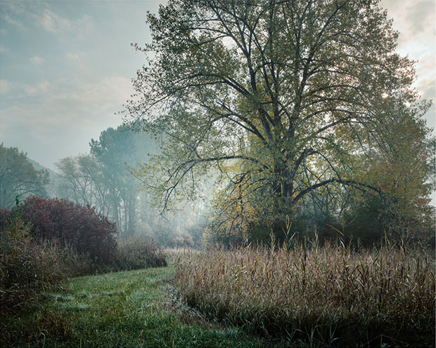 The Hidden Wetlands of the Rhine River, in Photos