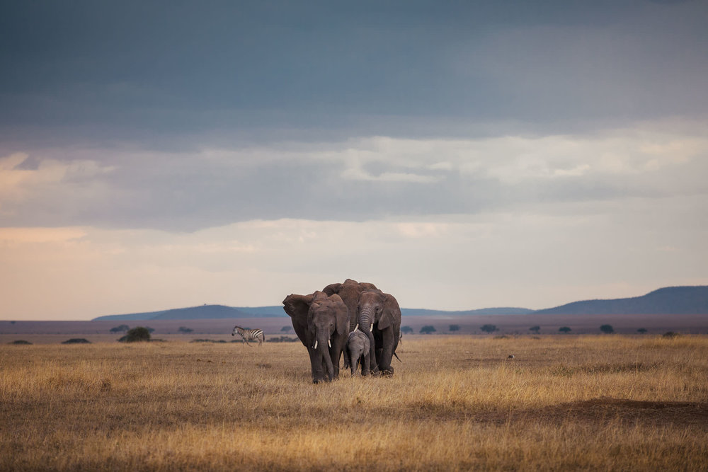 Tanzania-19.jpg