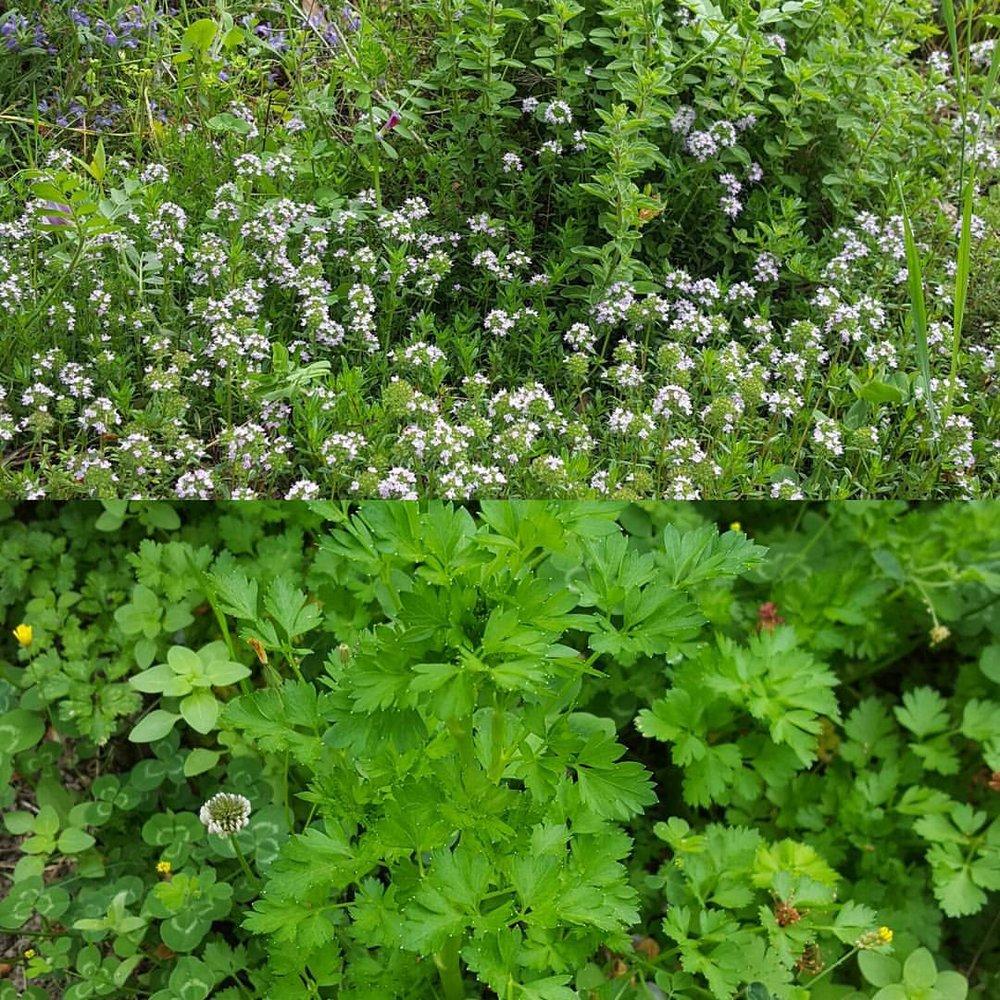 herbes.jpg