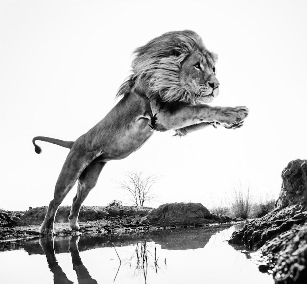 Wildlife photography interview with wildlife photographer David Yarrow
