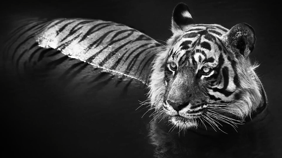 Wildlife-photography-with-wildlife-photographer-David-Yarrow.png