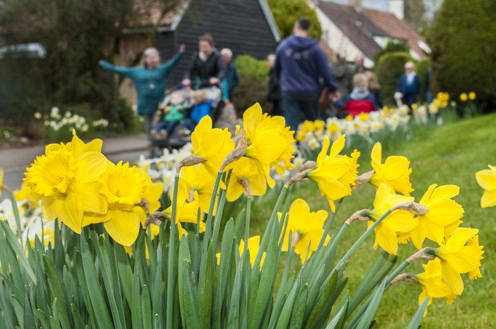 Daffodil Weekend-2 20cm.jpg