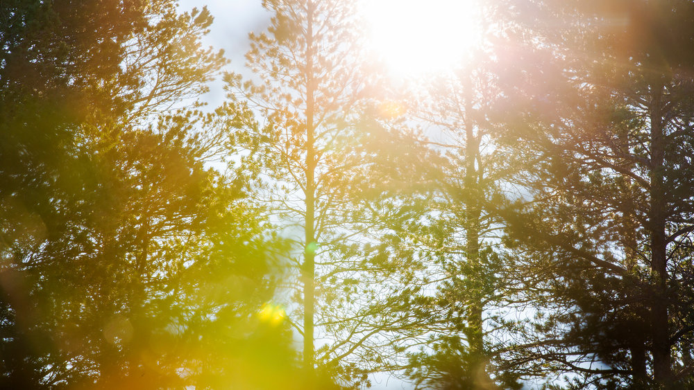 himmelhoy-tretopphytte-namdalen_23.jpg
