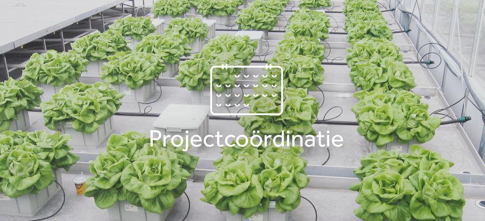 Hortinfo_producten_en_diensten_0002_Totaal project.jpg