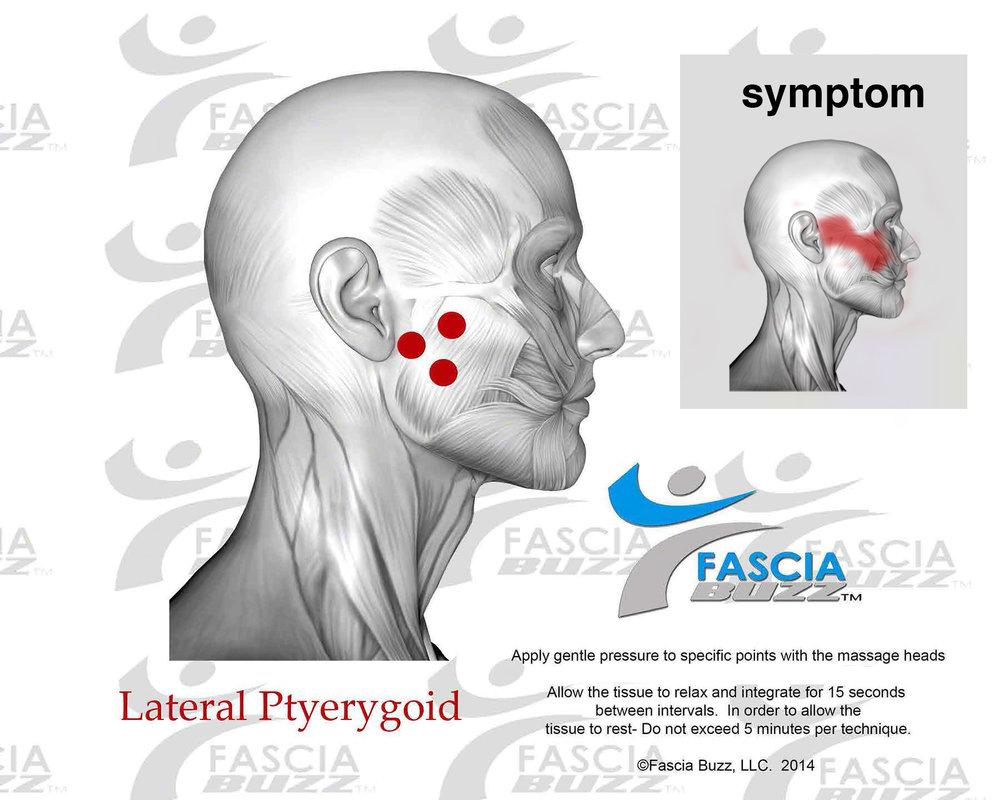 lateralpterygoid.jpg