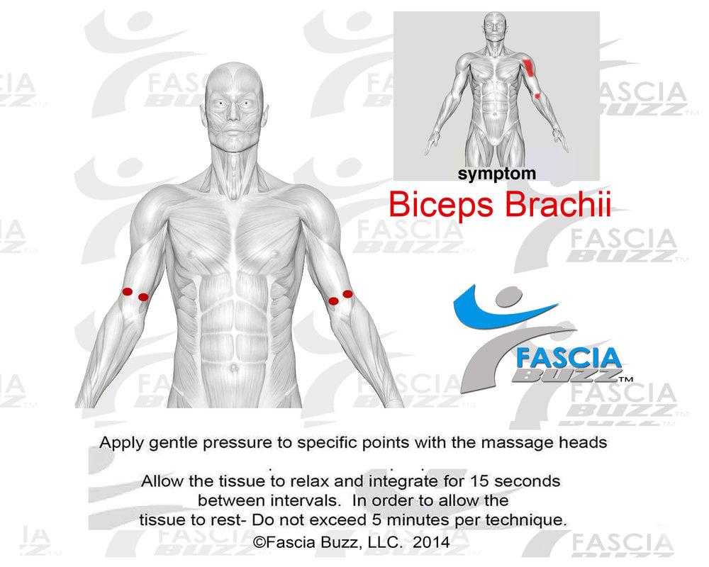 bicepsbrachii.jpg