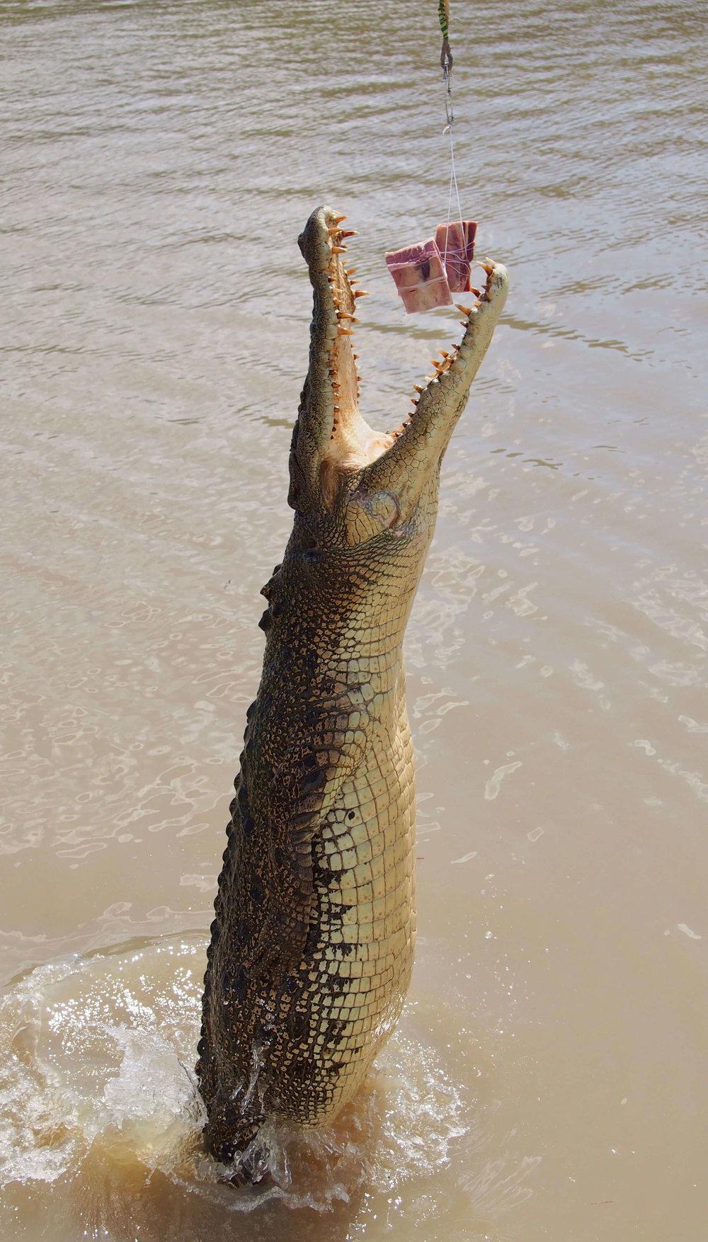 Litchfield National Park Tour Jumping Croc NT Day Tours