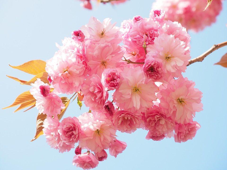 rustranslator_irina_england     blooming - обзор обсценных британских слов!    Blooming!/ Какое универсальное слово - Blooming.  Его можно использовать со значением 'цветущий', 'цвести. She is in blooming health! - у нее цветущее здоровье.  А можно использовать в качестве негрубого ругательста или для выражения раздражительности.  What a blooming mess! You are a blooming idiot! В английском есть и другие замечательные выразительные, не сильно грубые ругательства:  Bleeding, blinking, blasted - What a bleeding, blinking, blasted mess! (Выбирай любое на вкус!) На русский можно запросто и не переводить эти слова, а просто сказать - какой ужасный кошмар! А вот если вы хотите это же сказать по-английски, будет лучше немного и поругаться. Ну чтобы донести суть! Или вот еще люблю и часто употребляю Blimey! Blimey, what happened to you? Боже, что с тобой случилось? Но все они стали заменителями самого экспресссивного слова bloody. What a bloody mess! Bloody idiot! Stop, bloody, swearing!  Просто оно было запрещено в викторианские времена, поэтому среднему классу пришлось изворачиваться и придумывать замену. So go on, swear like the British!  To be continued ...