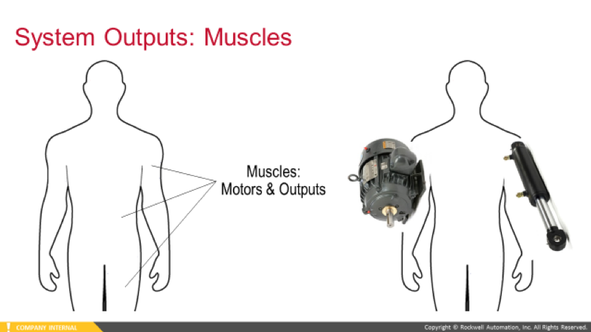 Automation And The Body Inputs And Outputs Vs Senses And Muscles