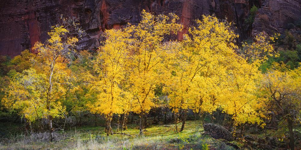 Autumn-Rising-REV2-web.png