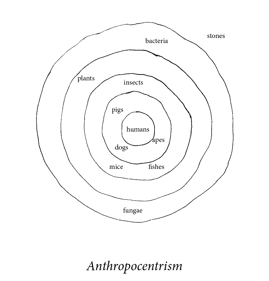 anthropocentrism.png