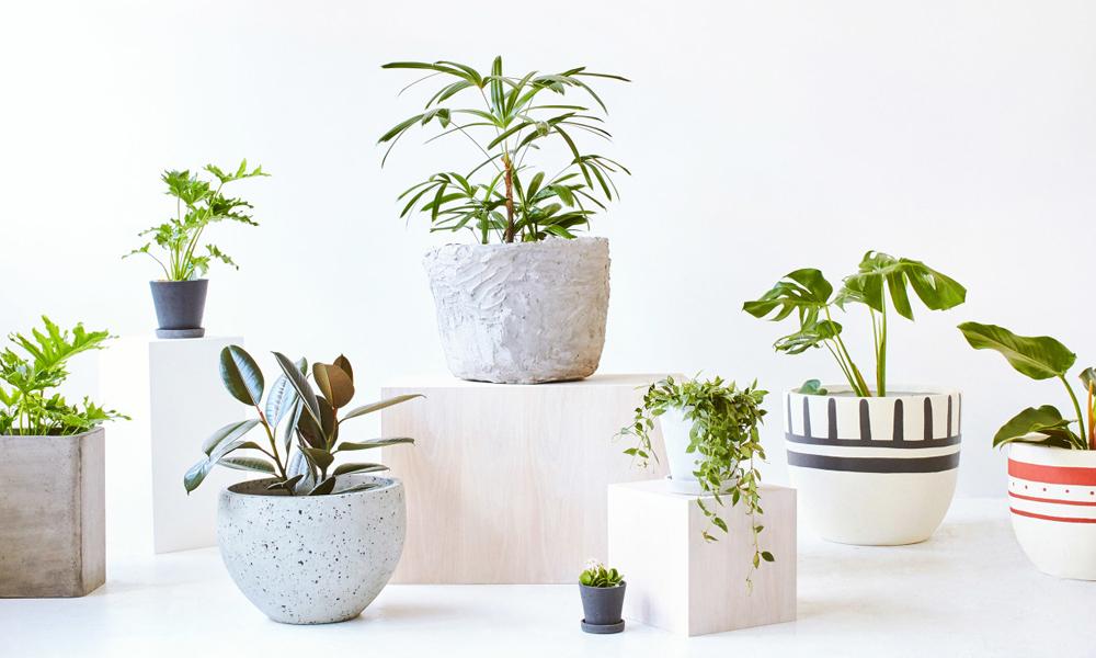 ceramic planters.jpg