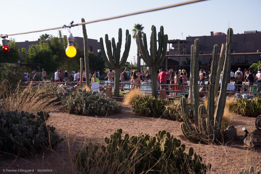 The Oasis festival in Marrakech